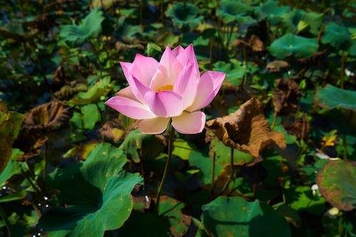 flower-2439993_1920